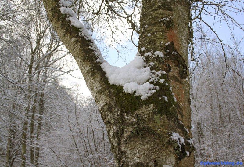 Winterspaziergang 01