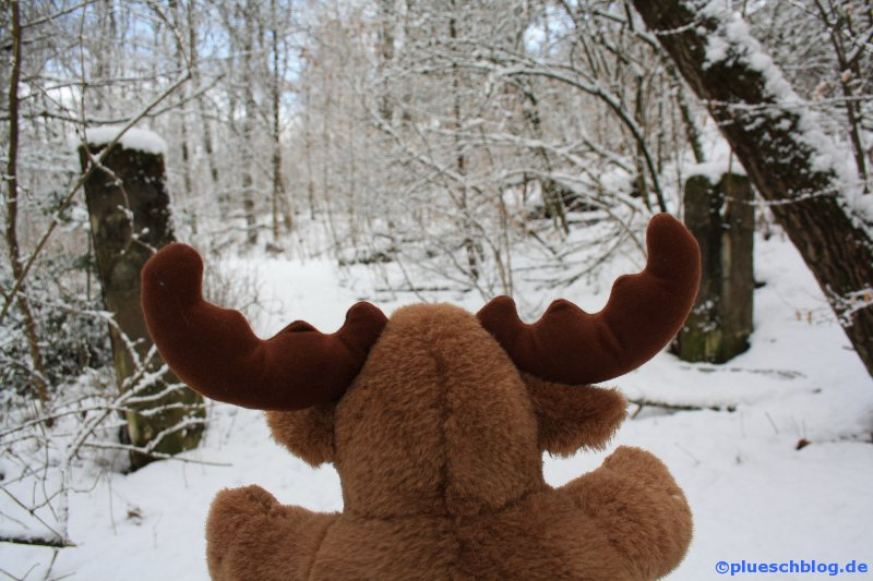 Winterspaziergang 19