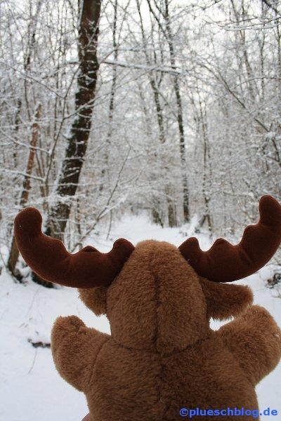Winterspaziergang 18