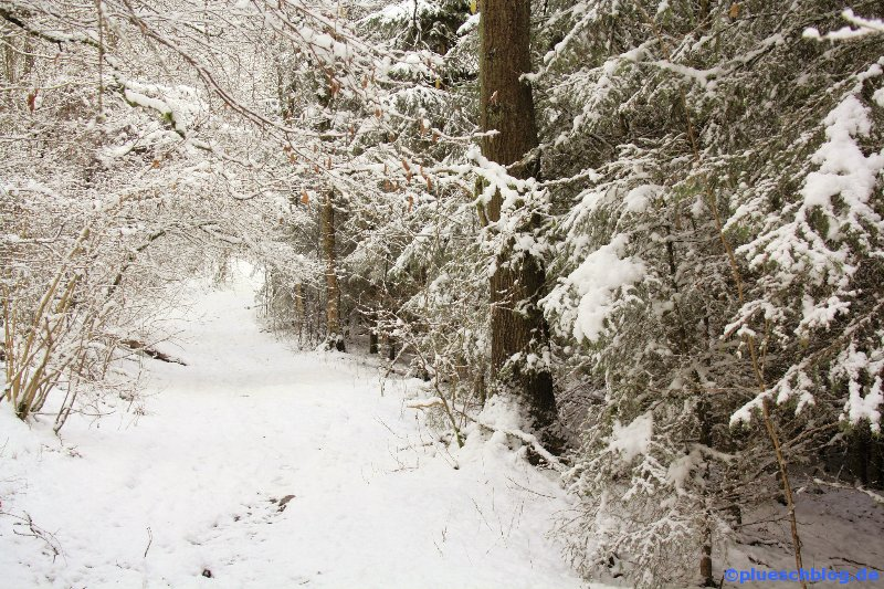 Winterspaziergang 22