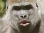 Zoo Wuppertal 2013