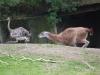 zoo-wuppertal-36
