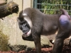 zoo-wuppertal-49
