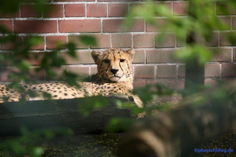 zoo-wuppertal-09