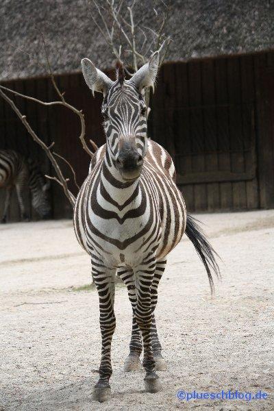 zoo-wuppertal-29