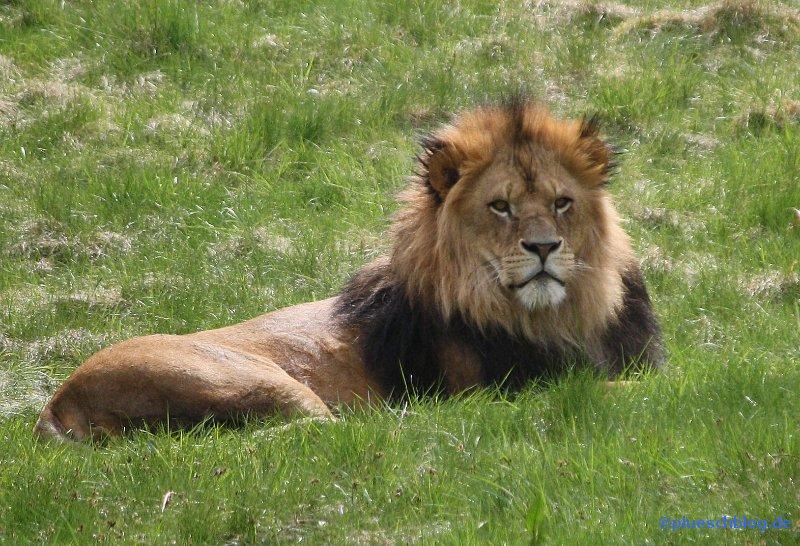 zoo-wuppertal-39