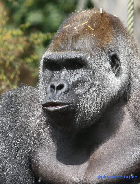 zoo-wuppertal-46