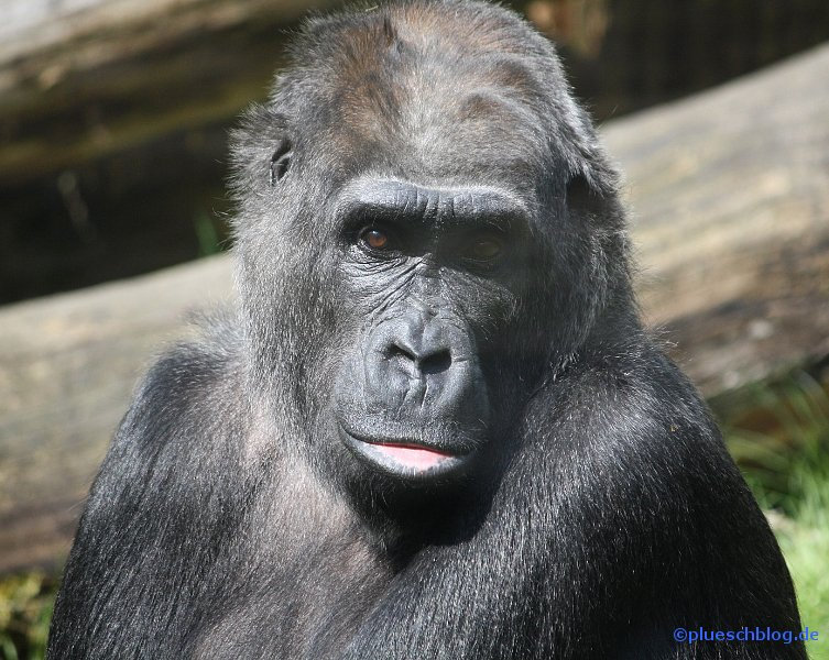 zoo-wuppertal-51