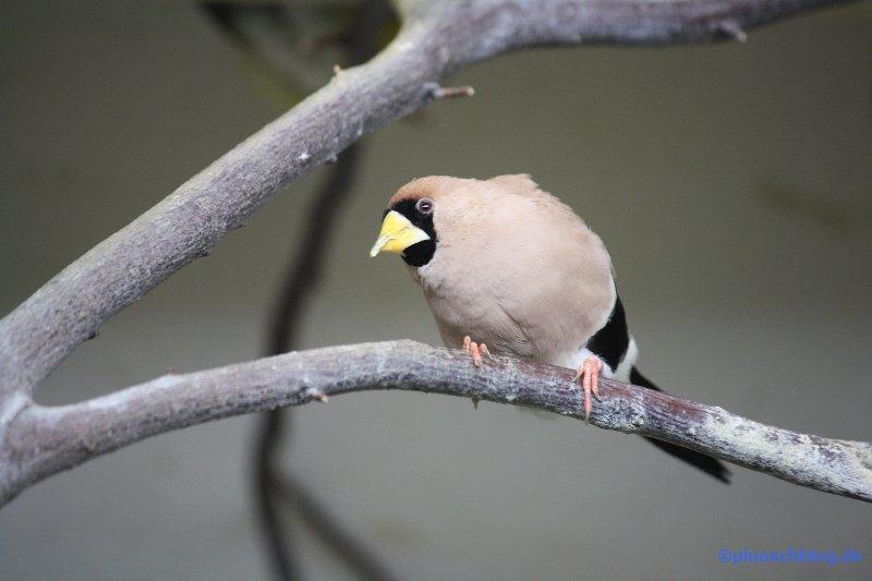 zoo-wuppertal-61